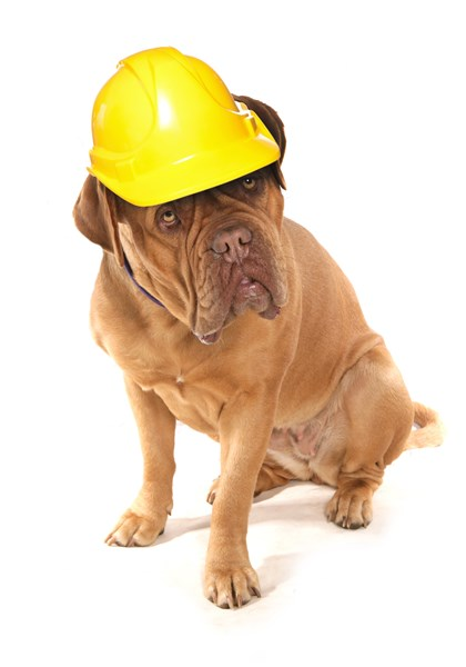 uk likewise health and safety likewise utonagan on pet care insurance