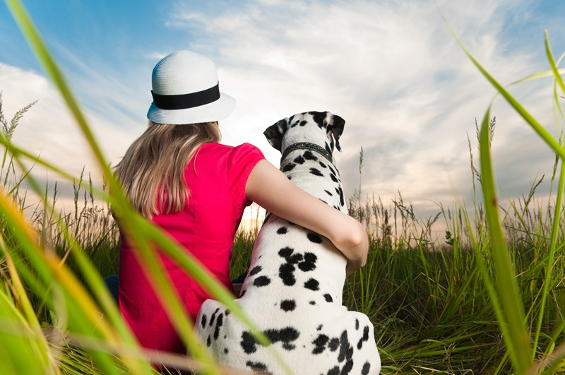 Dog-_friends,_sunset