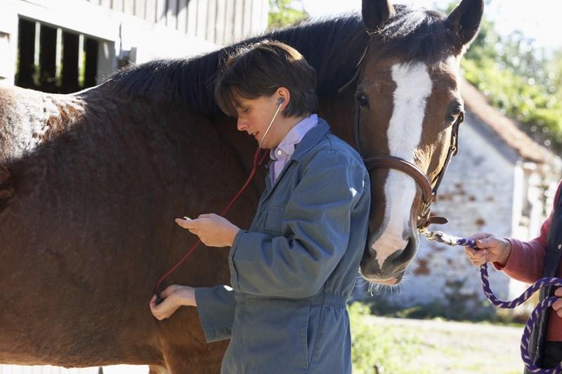 Find a Veterinarian   Ontario Veterinary Medical Association