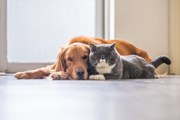 Cute_dog_and_cat
