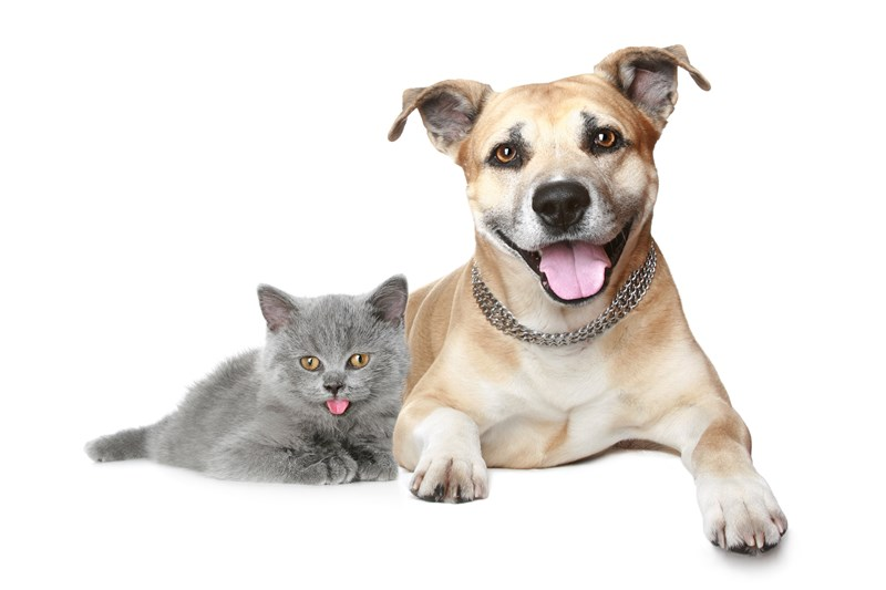 dog_and_cat