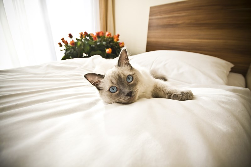 Cat_on_bed