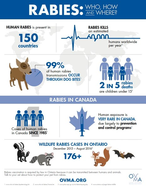 OVMA_rabies_infographic_2