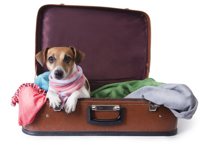 pet_travel_suitcase