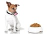 Dog-_looking_at_food-web